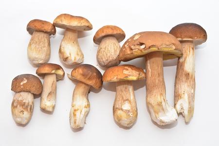 White mushroom (Boletus edulis). Group of edible mushrooms on white background.