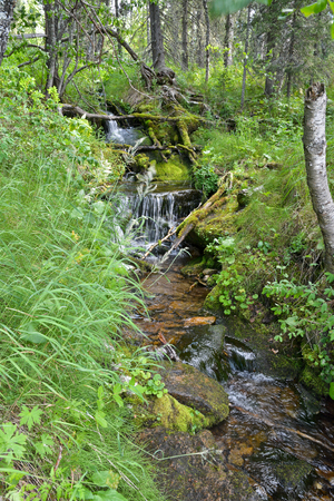 world natural heritage: Taiga creek in the national park in the Urals. Virgin Komi Forests World Natural Heritage by UNESCO.