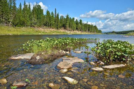 world natural heritage: Summer landscape of the taiga river in the Urals. Virgin Komi Forests World Natural Heritage by UNESCO. Stock Photo