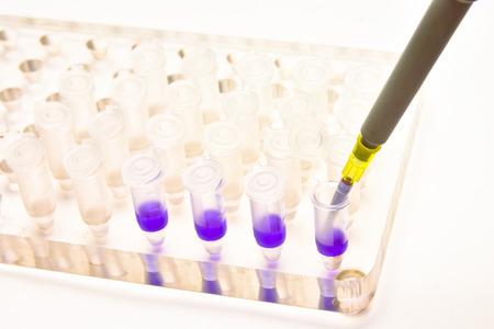 pcr: Adding a biological sample pipette. Biomedical research in a scientific laboratory. Stock Photo