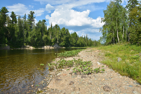 urals: Taiga river in the Northern Urals. The Virgin Komi forests   in the national Park Yugyd VA.