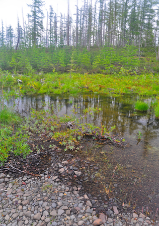 groundwater: A small marshy pond in the North cloudy weather. Cloudy views of the swamp on the Putorana plateau.