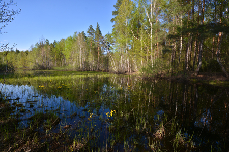 Pond in the spring forest. May landscape with water and trees.