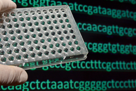 human evolution: Sequencing the genome. Sequence of nucleotide bases in DNA.