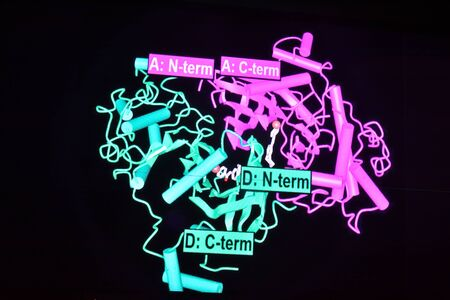 proteomics: Structure of the protein molecule. Projection on the plane of the biopolymer structure.