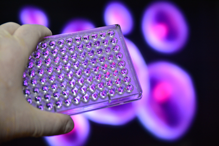 pcr: In the laboratory of medical genetics. Well plates in the hand of the scientist. Stock Photo