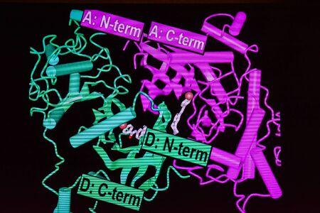 Un modello strutturale di una molecola proteica. Modellazione 3D di macromolecole. Archivio Fotografico - 96731842