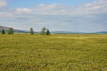 Foothill tundra. Natural Park of the Polar Urals in Russia. Stok Fotoğraf - 118808744