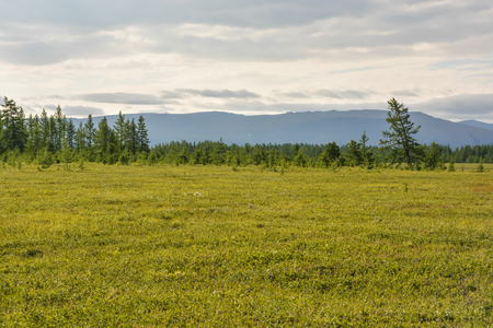 Foothill tundra. Natural Park of the Polar Urals in Russia.