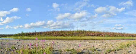 Panorama of the northern river. Summer water landscape in the Polar Urals.