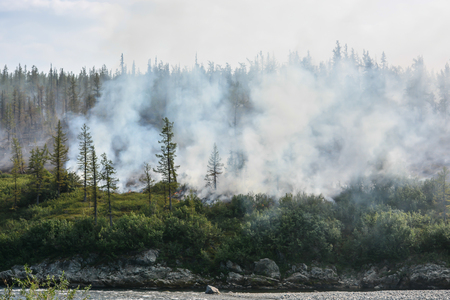 Forest fire. Natural disaster in the taiga in the polar Urals. 版權商用圖片