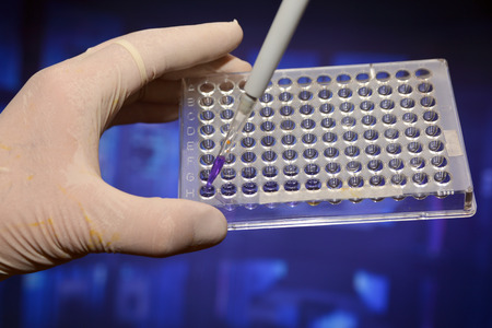 In the biological scientific laboratory. The sample is pipetted into a well plate. Banque d'images - 122394060