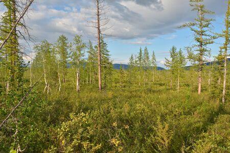 Landscape foothill forest-tundra on the Putorana plateau, Taimyr, Siberia, Russia.