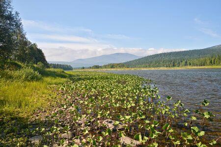 Virgin Komi forests, national Park Yugyd VA. River landscape in the Northern Urals