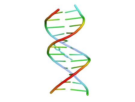 3D model of DNA. Structure of biological macromolecules.