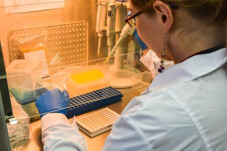 Sample preparation for PCR diagnostics. The researcher in a laminar box pipetted the samples into a 96-well PCR plate.