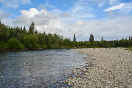 Taiga river in the Komi Republic. Summer water Northern landscape.
