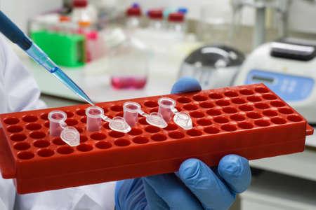 In a scientific biological laboratory. Biological sample manipulation. Archivio Fotografico