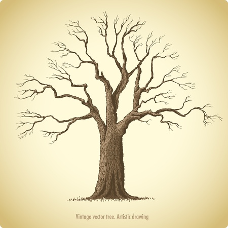 huge tree: Tree  Illustration