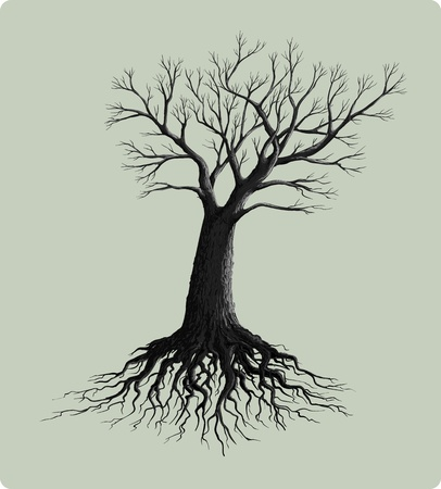 tree with roots vector illustration  Vector