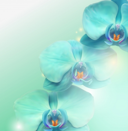 orchids: Flower background layout