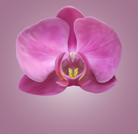 Orchid flower background Vector