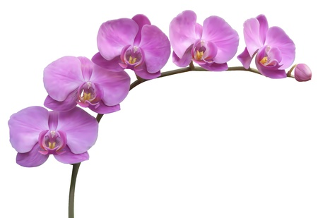Flower Orchid frame background Vector