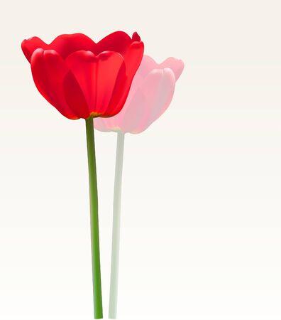 tulipe rouge: Red Tulip vecteur fleur