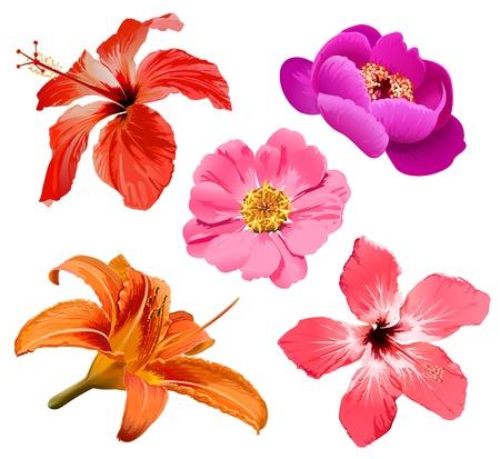 tropisch: Blumen vector set