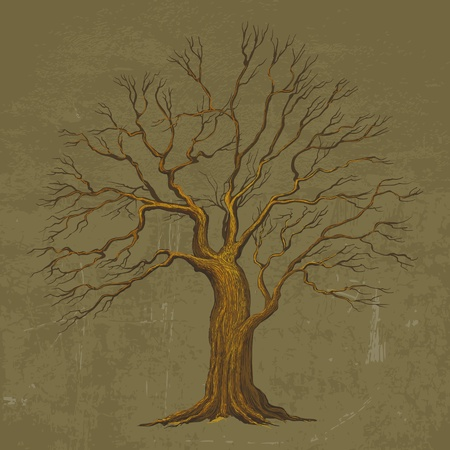tall tree: Big Tree vector illustration