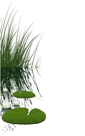 waterlelie en groene planten Vector Illustratie