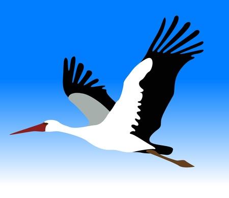 egret: vector stork