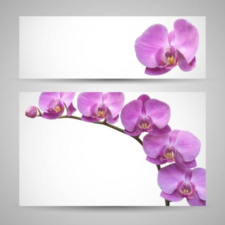 oriental season: Orchid flower vector template