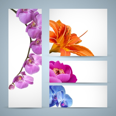 Vector flowers, orchid, lily and peony blossom Vector