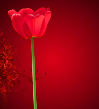 Valentine day vector flower background. Red tulip illustration Vector