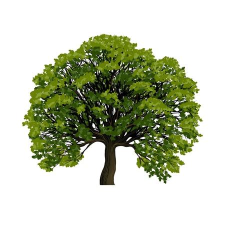 hojas de arbol: Un gran árbol verde, vector, símbolo,
