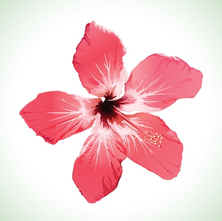 Hibiscus flower blossom vector illustration Stock Vector - 11950612