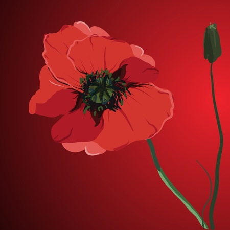 red flower poppy vector memorial illustration Vector