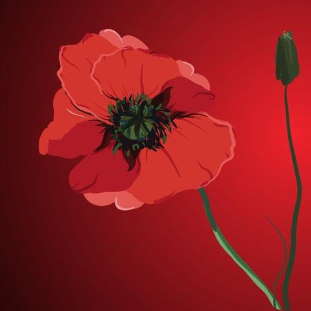 red flower poppy vector memorial illustration Vector