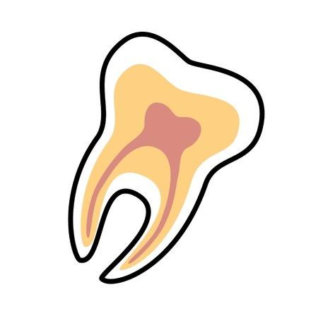 teeth whitening: Tooth vector icon. Dental symbol Illustration