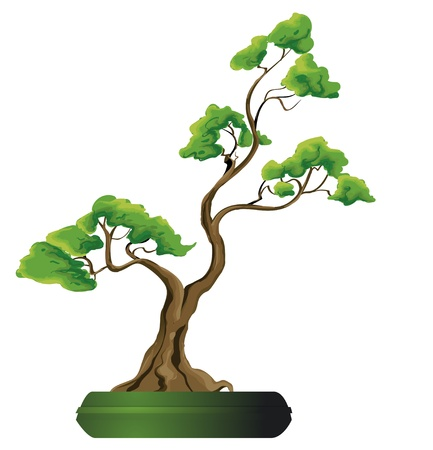 pine decoration: Bonsai tree vector illustration
