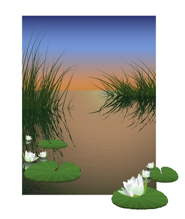Nature pond background. Waterlily flower on water Stock Vector - 11950631