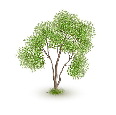 Green Tree Realistic Vector