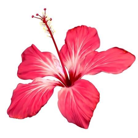 beautiful red hibiscus flower: Flor de hibisco flor de arte vectorial