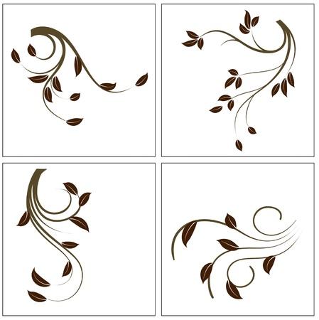 leaf curl: Decoration Plants