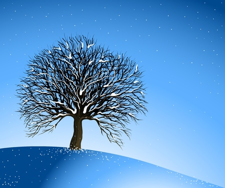 lonely tree: Winter Landscape. Lonely Tree
