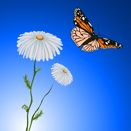 Chamomile and Butterfly Vector
