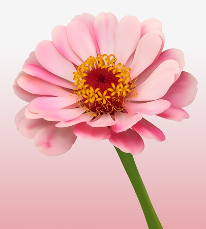 daisy flower: Flower Bloom Background