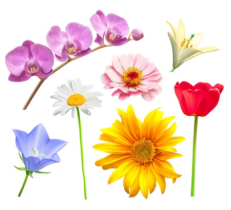 Flower set. Orchid, tulip, chamomile, lily, bluebell and daisy Vector