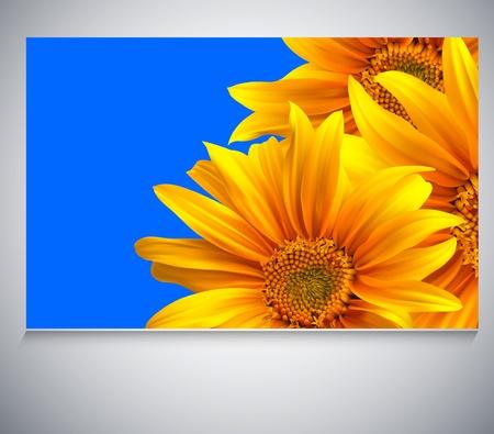 Flower template vector background. Sunflower card Stock Vector - 12195934